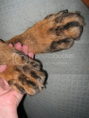 short dog's nails