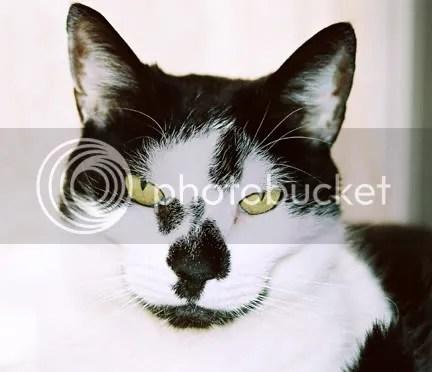 Close up Peeper