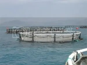 Sea Cages