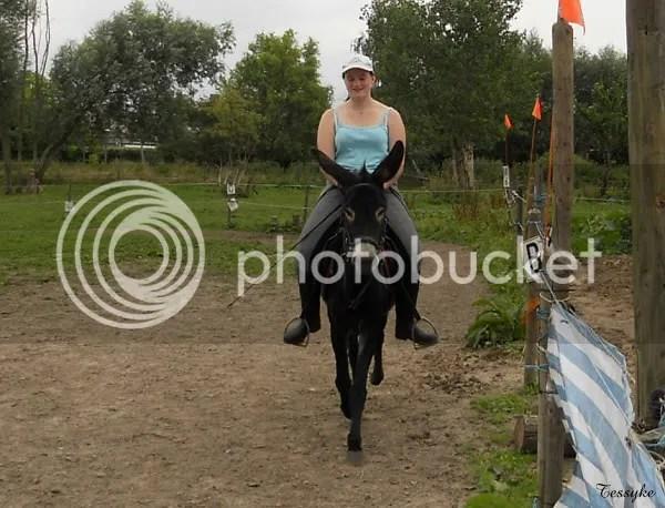 Wat is duurder Een paard of een ezel  Boktnl