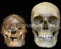 Hobbit skull next to Human.  Photo: Peter Brown