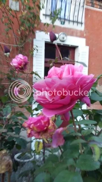 photo 021_zpsel8qlyqy.jpg
