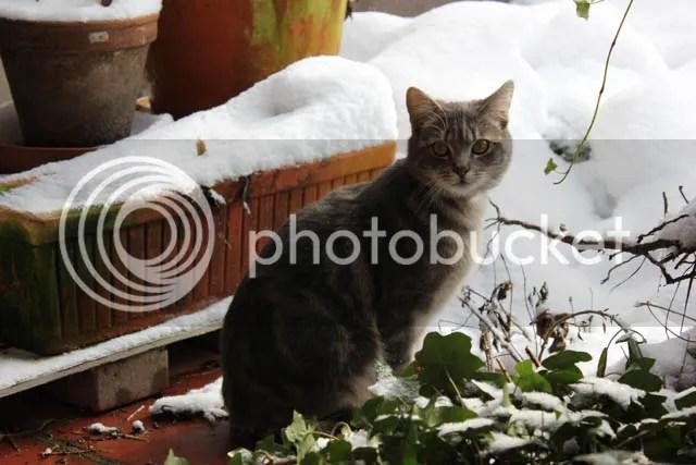 photo Sneeuwpret_02.jpg