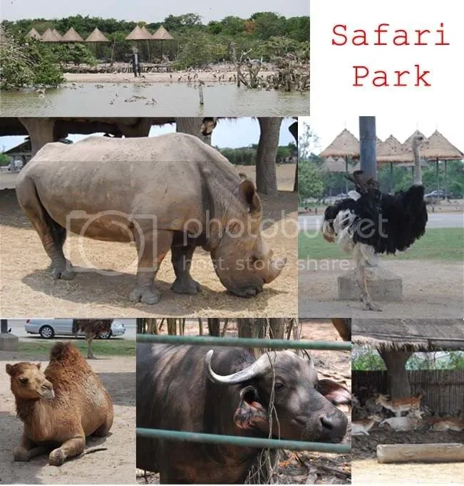 safari.jpg picture by jumpook