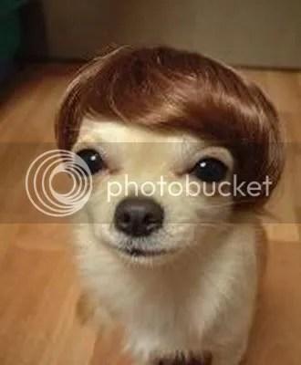 Cão peruca