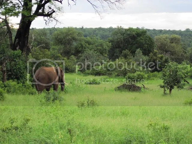 photo Elephant_on_Mahonie_loop_Feb2014_zps545cbd8a.jpg
