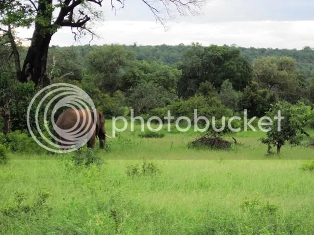 photo Elephant_on_Mahonie_loop_Feb2014_zps545cbd8a.jpg