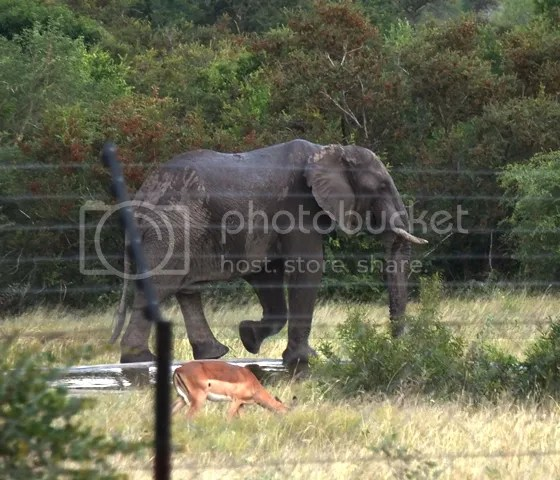 photo Part3_ElephantatOrpenfromverandah_zps43ac5574.jpg