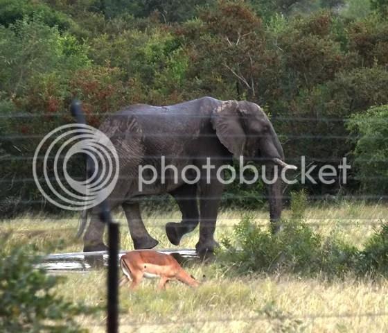 photo Part3_ElephantatOrpenfromverandah_zps43ac5574.jpg