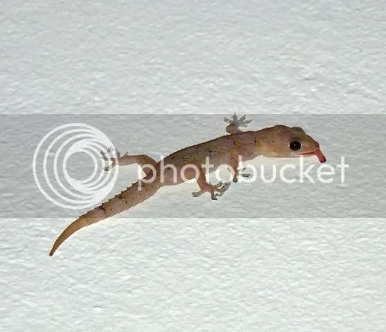 photo Part3_GeckoatOrpen_zps01aafa84.jpg