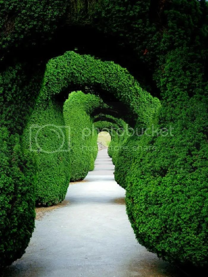 funny greenery pictures9