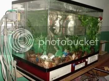 Mais uma solução para o calor. Dentro de um aquário.
