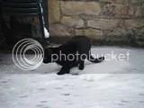 Snowcat Tinker
