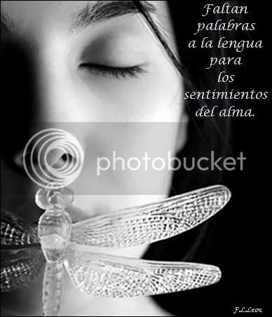 silencio2.jpg picture by leha67
