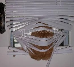 how to clean plastic blinds
