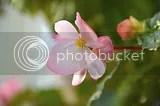 photo DSC_2588.jpg