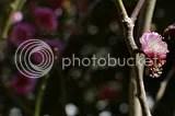 photo DSC_2672.jpg