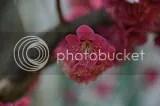 photo DSC_2848.jpg