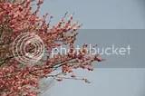 photo DSC_2849.jpg