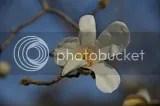 photo DSC_2972.jpg