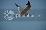 photo DSC_8540.jpg