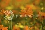 photo DSC_9893.jpg