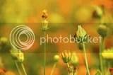 photo DSC_9922.jpg