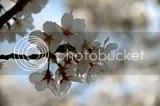 photo DSC_5372.jpg