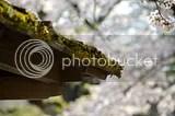 photo DSC_5691.jpg