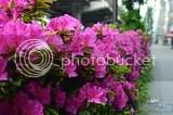 photo DSC_5924.jpg