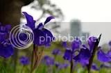 photo DSC_5941.jpg