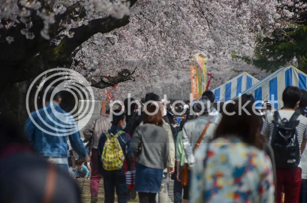 photo 20160403_fujioka_03.jpg