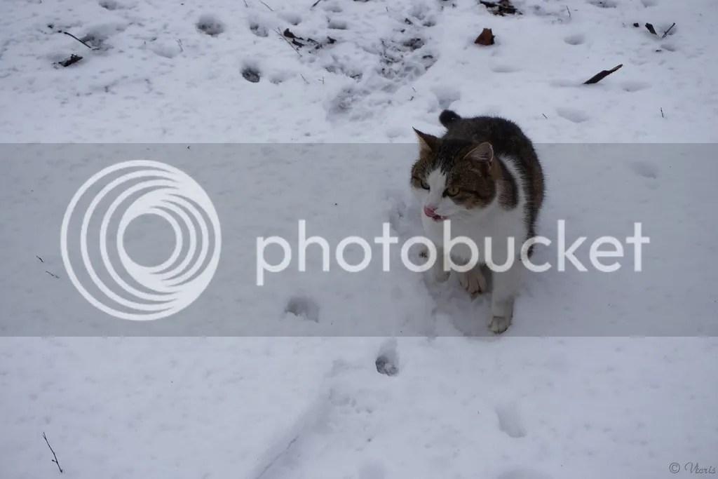 photo DSC01965.jpg