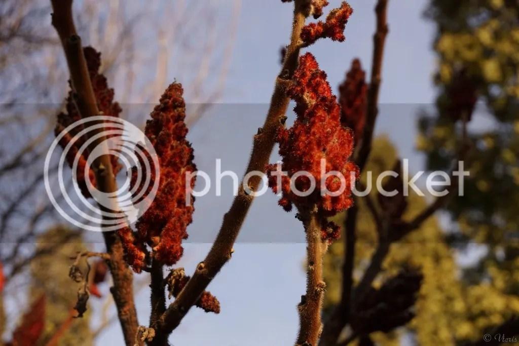 photo DSC02238.jpg