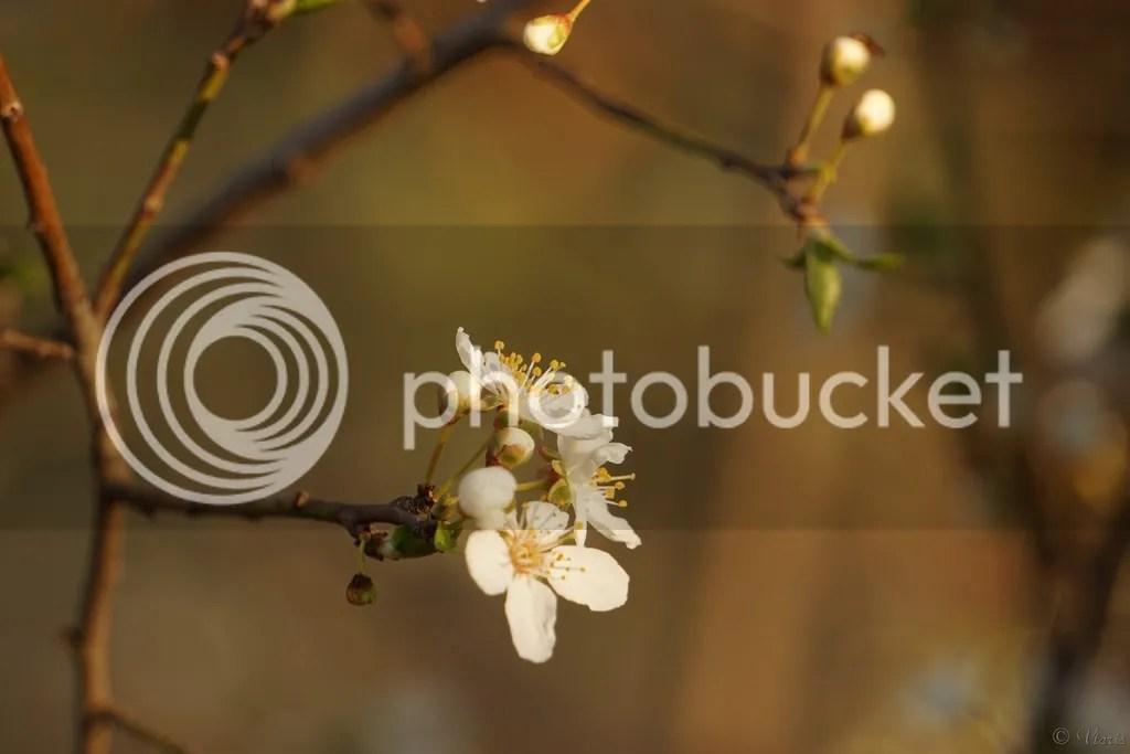 photo DSC04889.jpg