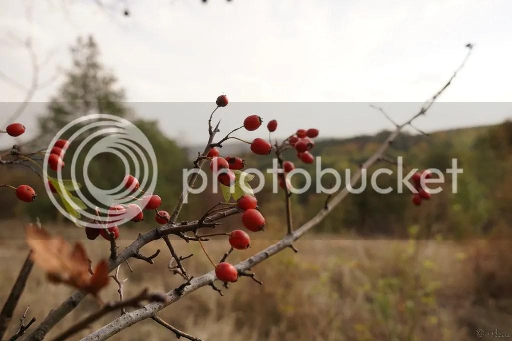 Imagini pentru poze cu păducele