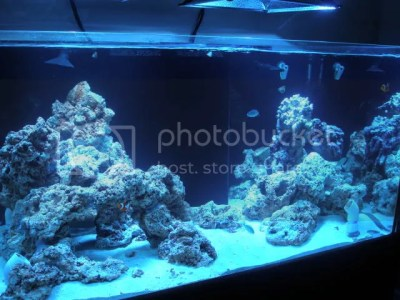 Show off your Island Style AquaScape - Page 2 - Reef ...