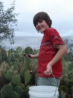 E picks the prickly pears
