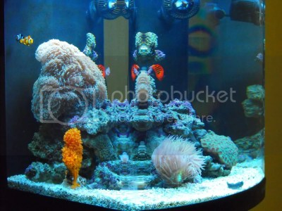 Reefing The Australian Way Forums • View topic - Greed's ...