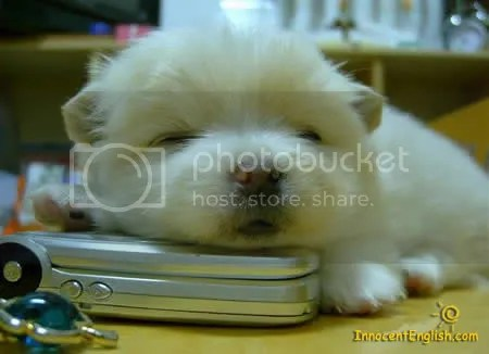 I was so tired of talking on the phone, litturely ON THE PHONE!!!!, cute dog , anjing berpuasa,