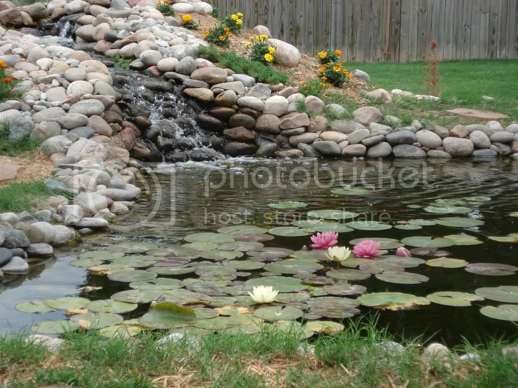 The pond in the spring time and summer