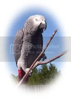 Rufus the Wonder Bird!