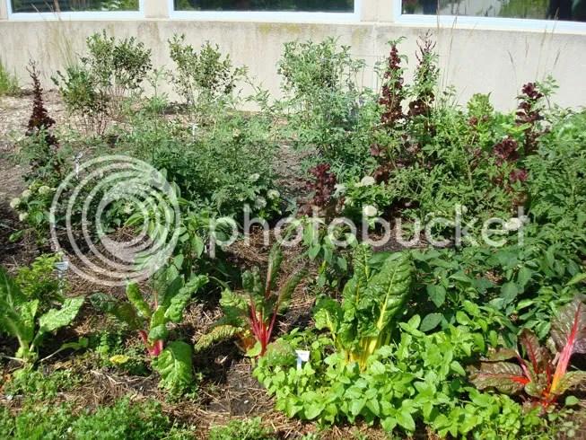 Smart Home - Garden