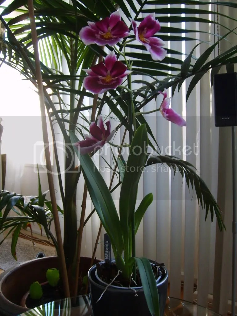 kamerplanten  Nieuws en tips