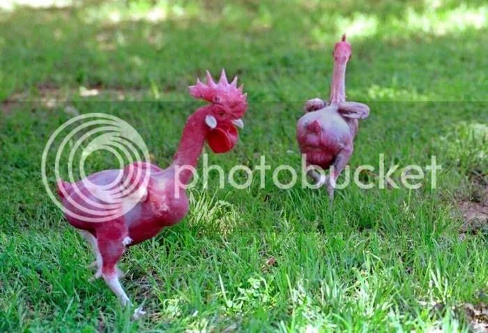 Ayam Kampus Telanjang Seksi