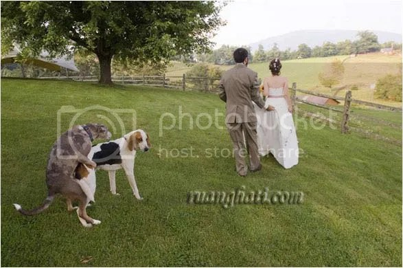 foto ml pengantin baru doggy syle
