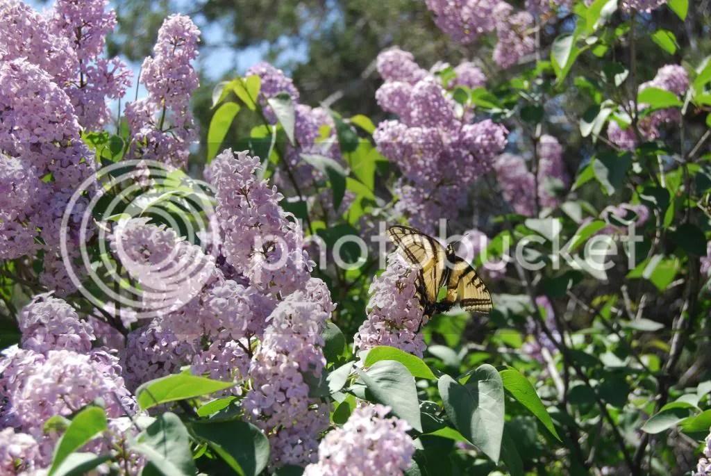 butterfly in sedona