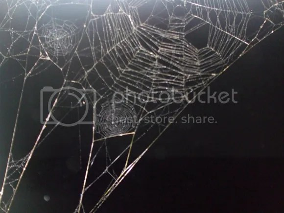 spider web image by rochelle wisoff fields photo prompt the moses field madison woods friday fictioneers flash fiction, This image of spider webs is provided by Rochelle Wisoff Fields as the photo prompt for the September 14, 2012 Madison Woods Friday Fictioneers 100-word flash fiction challenge. My contribution is titled The Moses Field and is posted on my wordpress blog at https://ebooksscifi.wordpress.com