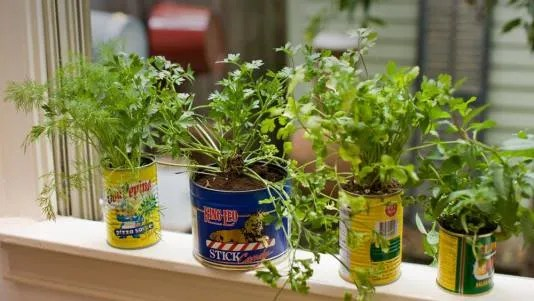 Herb Garden Inspiration & Ideas Over 50 Pots Planters And