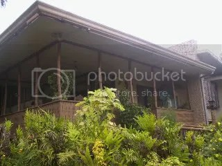 garden with orchids, ferns and ornamental plants